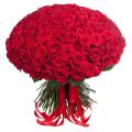 200 Big Red Roses