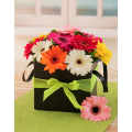 MIx Gerberas in holder