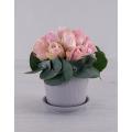 Pink Roses in holder