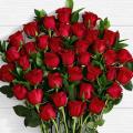 Offer 20 Roses   ΠΡΟ - 01