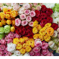 Luxurious Mix Of 20 Bighead Roses From Ecuador