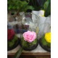 Forever Rose | Τριαντάφυλλο ροζ  σε γυάλα που κρατάνε 4 χρόνια χωρίς περιποίηση