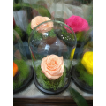 Forever Rose | Cream Color Rose In A Jar That Lasts 4 Years Without Care