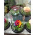 Forever Rose | Τριαντάφυλλο τρικολόρε  σε γυάλα που κρατάνε 4 χρόνια χωρίς περιποίηση