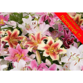 Offer 5 lilies Only 25 euros ΠΡΟ - 08
