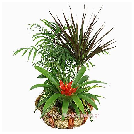 Σύνθεση Φυτών σε Καλάθι - PLANT 43019