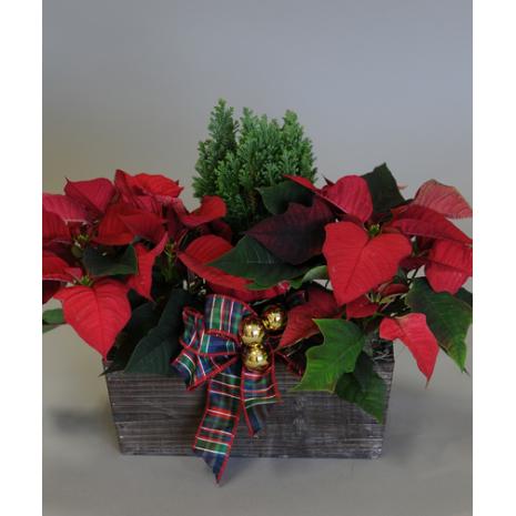 Χριστουγέννων Σύνθεση με Φυτά  - XMAS 44009
