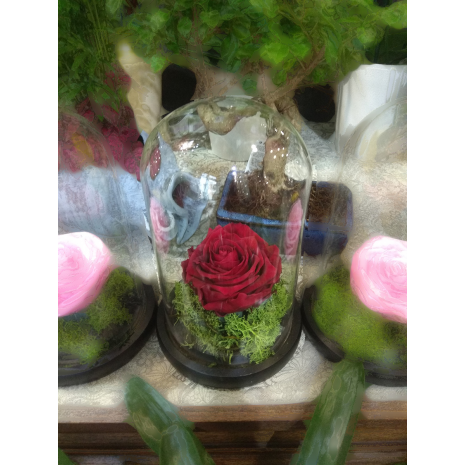 Forever Rose | Red Rose In A Jar That Lasts 4 Years Without Care