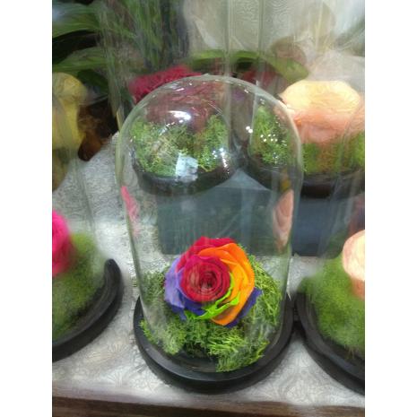 Forever Rose   Τριαντάφυλλα σε γυάλα
