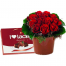 Flower Arrangements with red rose  ARR 12015