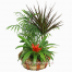 BASKETS WITH Plant Synthesis - PLANT 43019