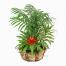 Σύνθεση Φυτών σε Καλάθι - PLANT 43020