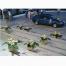 Λευκά Τριαντάφυλλα και Καζαμπλάνκες Δείγμα Δουλειάς - GAM00225