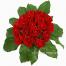Τριαντάφυλλα και Φυλλώματα σε Πήλινο - VAL 11040