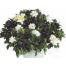 Γαρδένια - PLANT 43027