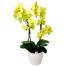 Ορχιδέα Φαλαινόψις - PLANT 43024
