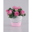 Flowerpot with Pink Roses in holder