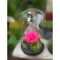 Forever Rose | Fuchsia Rose In A Jar That Lasts 4 Years Without Care